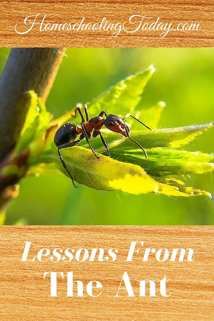 Lessons From The Ant