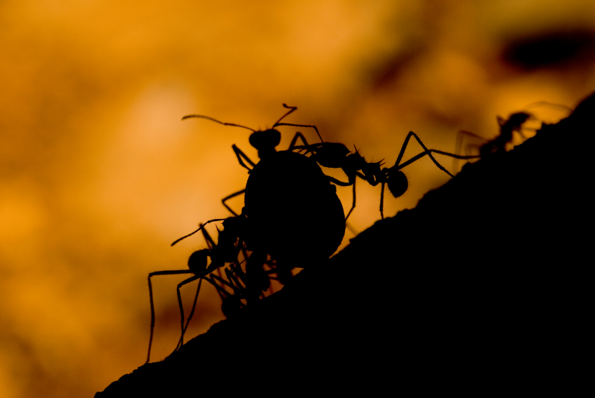 Lessons From The Ant - Homeschooling Today