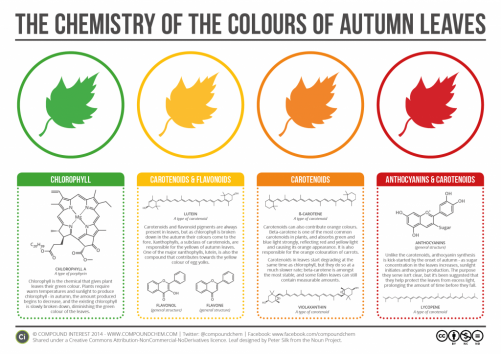 Fall Leaves Unit Study - Chemistry - Homeschooling Today Magazine