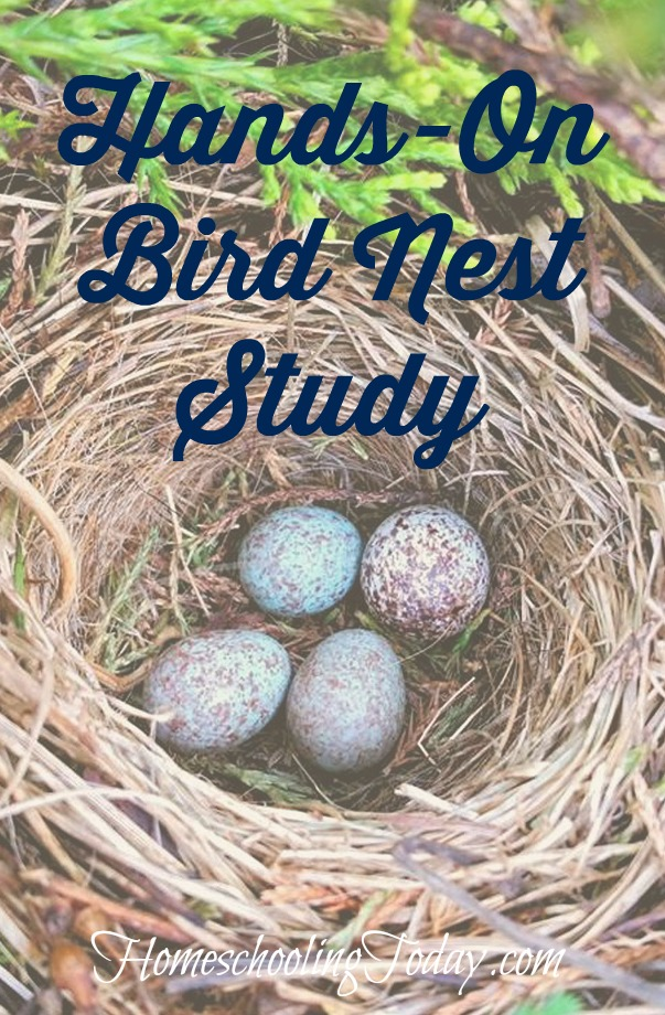 hands-on bird nest study - Homeschooling Today Magazine