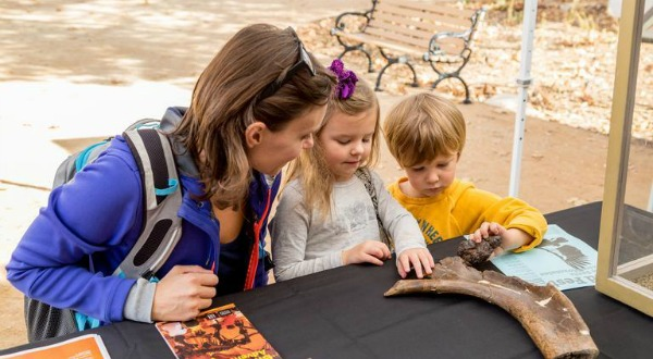 Tips for planning a homeschool field trip - Homeschooling Today Magazine