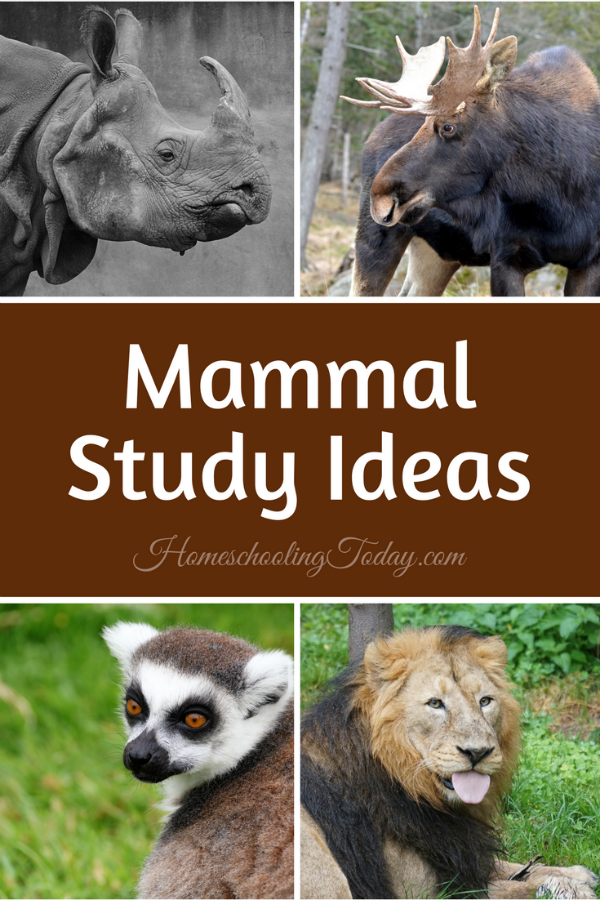 Mammal Study Ideas